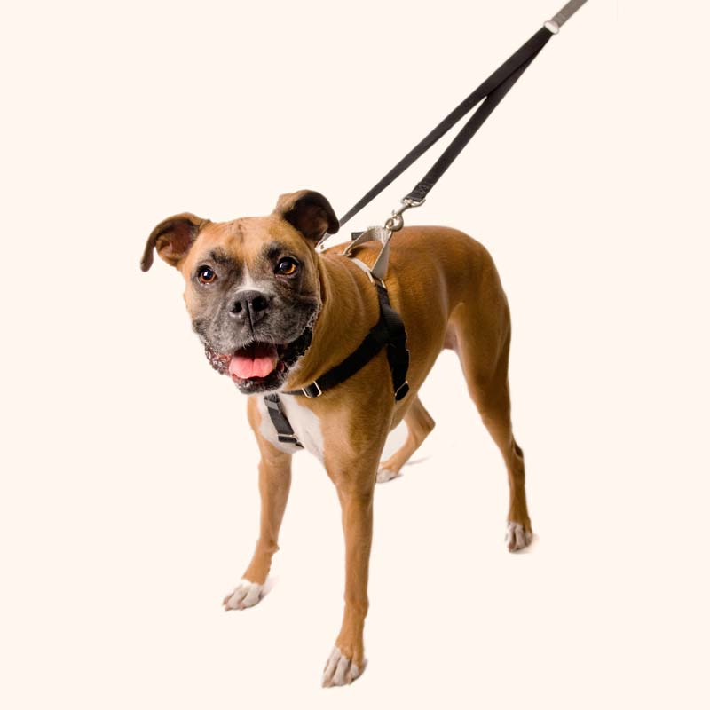 Harnesses - Freedom - No-Pull Harness