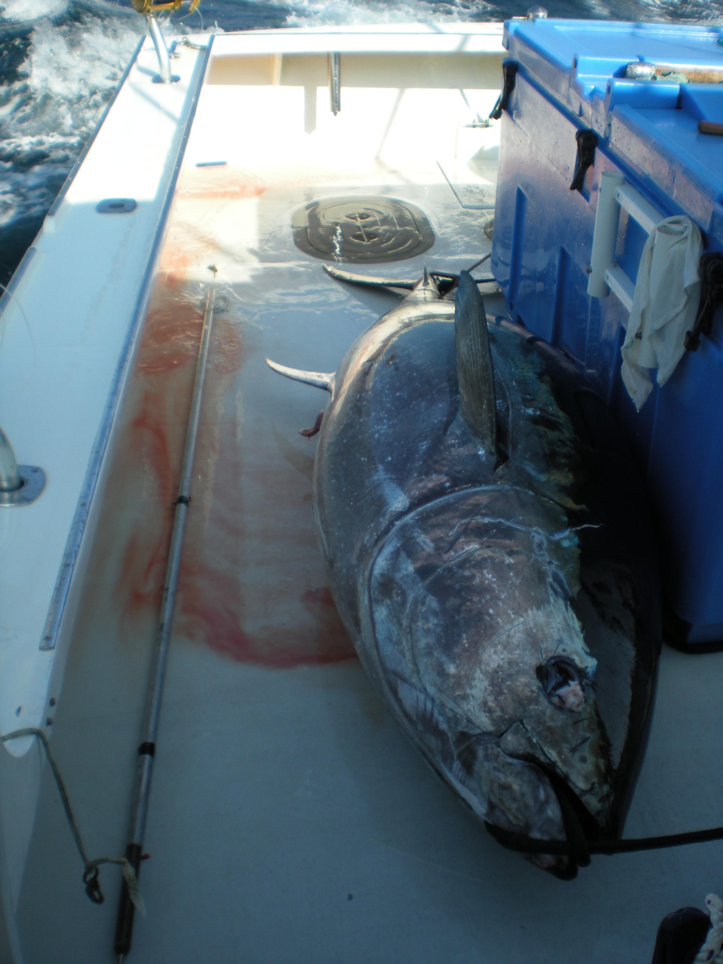 Bass River Fishing Charters